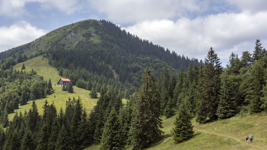 Velka Fatra Beauty In Nature Cloud - Sky Coniferous Tree Day Environment Forest Green Color Growth Idyllic Land Landscape Mountain Nature No People Non-urban Scene Outdoors Pine Tree Plant Scenics - Nature Sky Tranquil Scene Tranquility Tree
