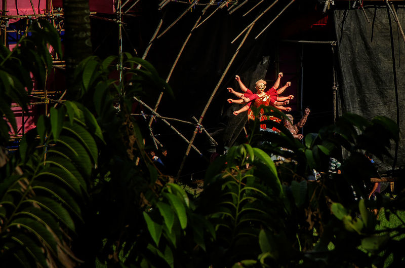 Durga Puja Beauty In Nature Bengalifestival Botany Durgapuja Festival Freshness Front Or Back Yard Green Color Growth Leaf Nature No People Outdoors Plant Plant Part