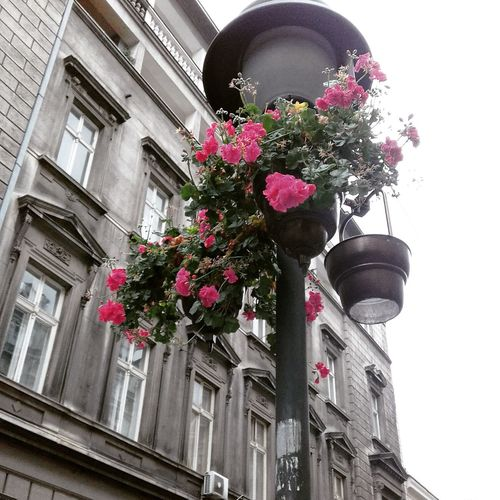 Flower Architecture Building Exterior Low Angle View Built Structure Outdoors Fragility No People Day City Growth Flower Head Freshness