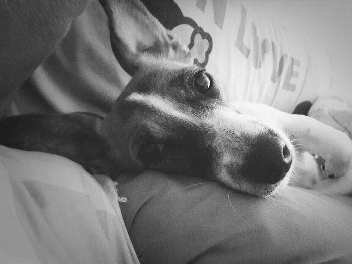 Mocca First Eyeem Photo