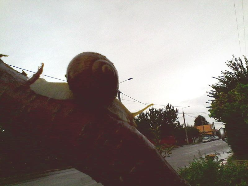 Rear View Built Structure Tree Outdoors Sky Building Exterior @wolfzuachis Ionitaveronica Wolfzuachis Eyeem Market Eyeemphoto Streetphotography House Houses Car Car On Road Road Snail Snail Silhouette Silhouette Silhouettes Silouette & Sky Silhouette_collection Sillouette Sillhouette