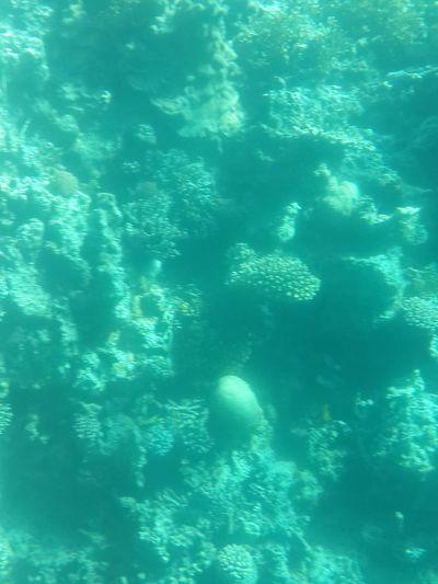 Underwater Insidethesea
