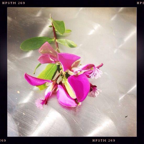 Sitges Flower