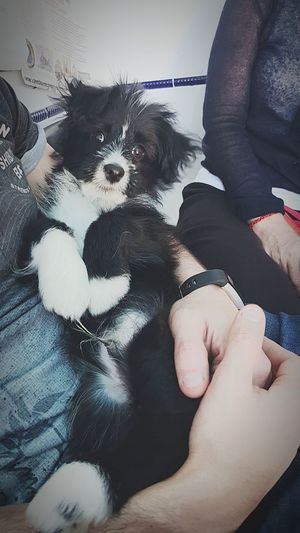 🐕 Dog Pets