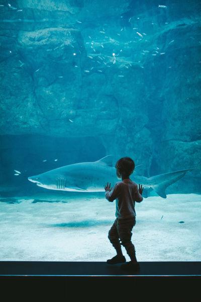 Exploring Kids Nature Adventure Animal Aquarium Boy Kid Shark Toddler