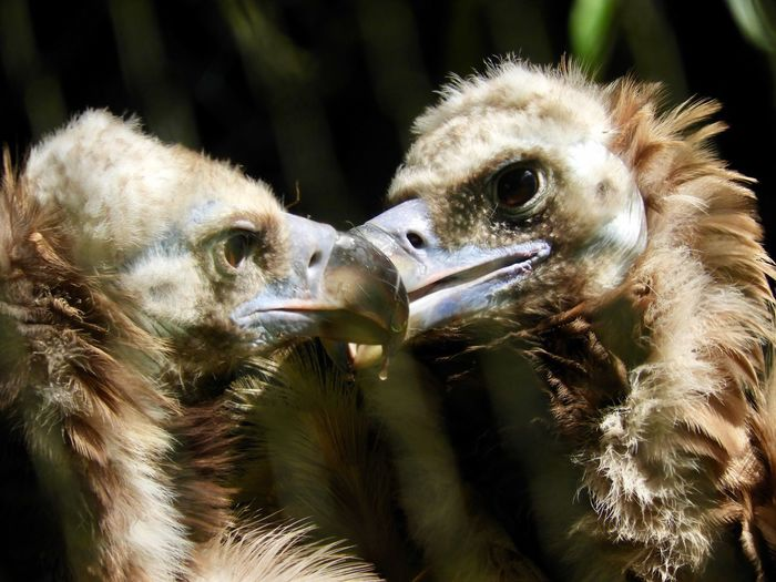 A Day At The Zoo Vultures In Love Close-up Outdoors Togetherness Nature No People Day