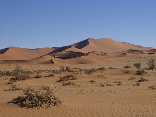 Africa Arid Climate Beauty In Nature Blue Clear Sky Desert Desert Beauty Desert Landscape Deserts Around The World EyeEm Nature Lover Landscape Landscape_Collection Namib Desert Namibia Nature No People Red Sand Sand Sand Dune Scenics Sossusvlei Tranquil Scene Tranquility Nature_collection Naturelovers