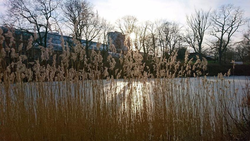 Through the winter grass. Hamburg Germany Hh Planten Un Blomen Park Hamburg Meine Perle City Grass Winter Gray Sky Sun Sunlight Mystery Water Tree Reflection Sky