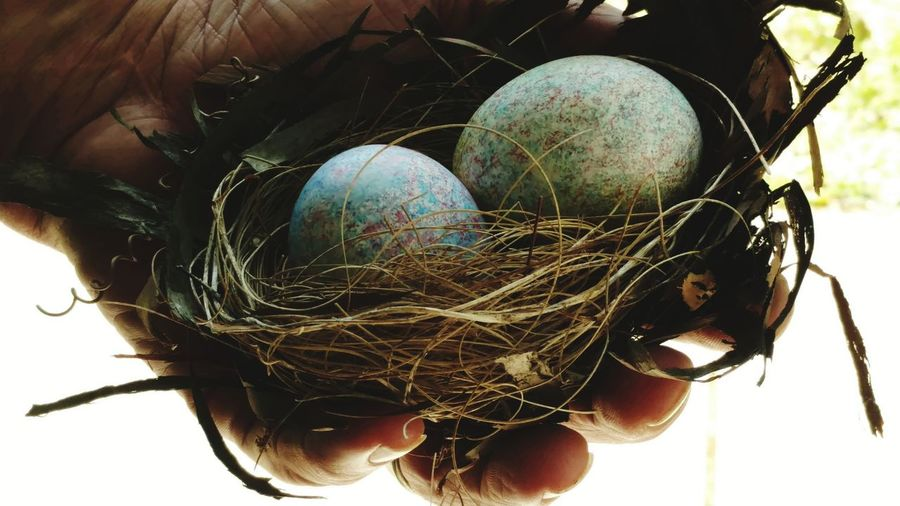 life and a home Colors and patterns Textures and Surfaces Human Hand Hand Of Man Artistic Expression Masculinity And Honor Easter Close-up Bird Nest Animal Nest Nest Egg Nest Eggshell Easter Egg Animal Egg The Still Life Photographer - 2018 EyeEm Awards Holiday Moments