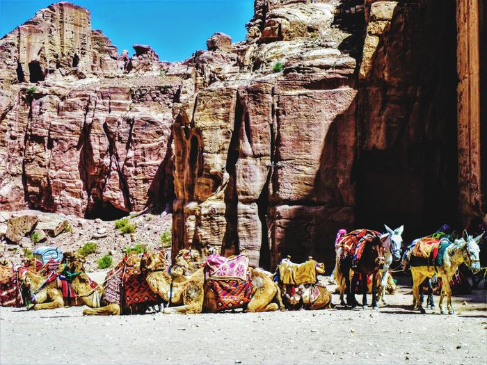 Panoramic view of camels and mules on rock formation against sky