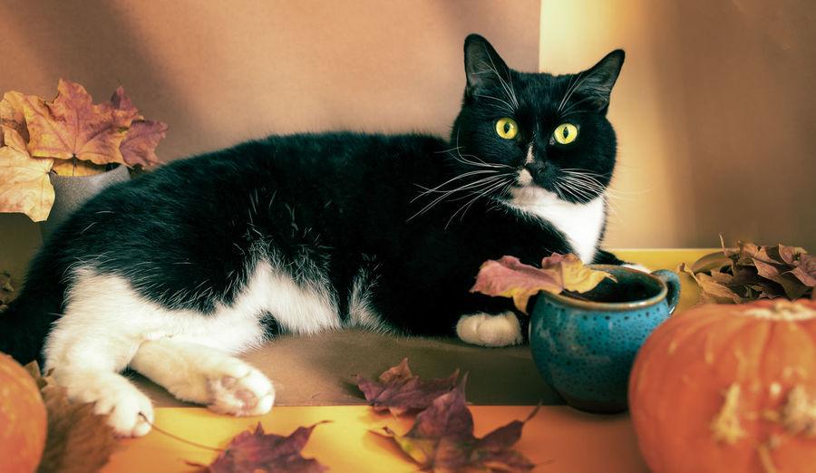 Portrait of cat lying on leaves