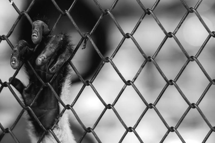 Hand Monkey Hand Imprisoned Lacking Lack Lack Of Freedom Black & White Freedom Close-up Want Freedom ใน Thailand