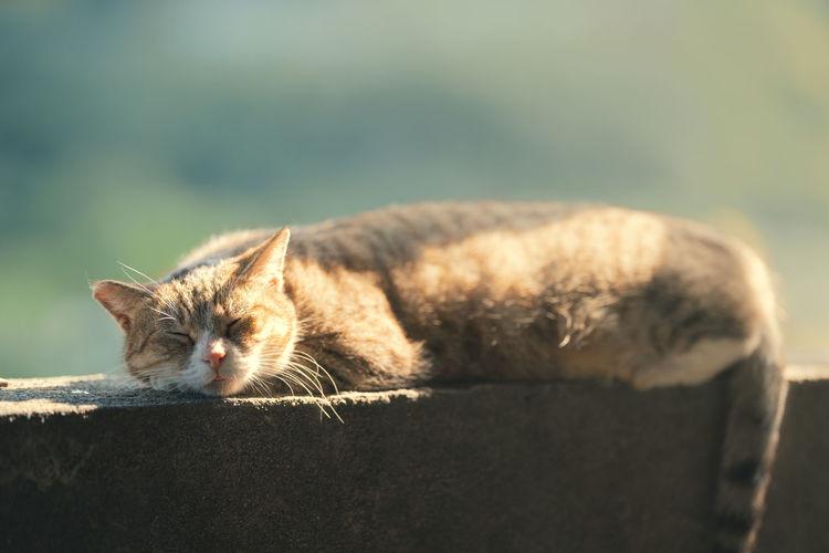CAT Cat One