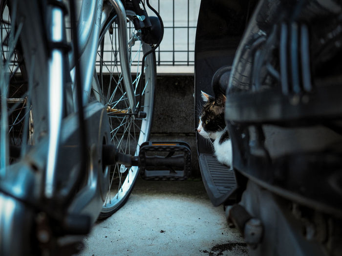 Biker cat. Animal Animal Themes Animals Bicycle Cat Cats Cats Of EyeEm Feline Kittens Land Vehicle Metal No People One Animal Pet Pet Photography  Pets Stray Cat ねこ 猫 野良猫
