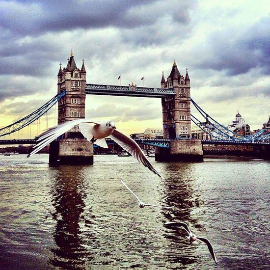Tower Bridge ????#alan_in_london #london #cultofbirds #birds #seagull #insta_uk #insta_london #london_only #shootermag #towerbridgelove London_only Cultofbirds Alan_in_london Insta_london Towerbridgelove Birds London Seagull Shootermag Insta_uk