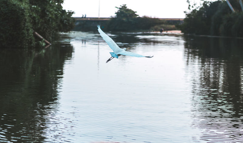 50mm Animal Themes Animal Wildlife Animals In The Wild Beak Beauty In Nature Bird Day Flying Great Egret Kerala Lake Mid-air Nature No People One Animal Outdoors Poovar Sky Spread Wings Swan Tree Trivandrum Water Waterfront
