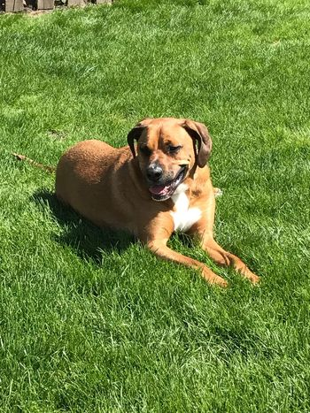 Such a good boy 😉 usually 😂 Grass Dog Pets One Animal Domestic Animals Mammal Animal Themes Green Color Growth Field Sunlight Day Nature Portrait Relaxation Looking At Camera Outdoors No People
