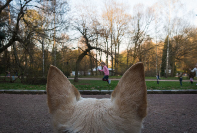 Animal Themes Child Composition Photography Dog Ears Frame Friends Landscape Looking At A Girl Mammal Nature One Animal Outdoors Park Running Girl Trees