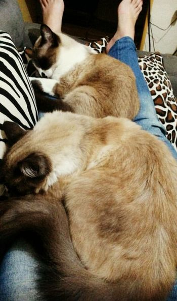 Mycats Lovely Cats Of EyeEm Pet Sleeping Cat 😻😻😻😻 Good Times Samsungs7edge Relaxing Time Myworld Lovephotography  Lovemyhome Verycold Cold Winter ❄⛄ Delicious 🍂🍂🍃🍃🍂🍂🍁🍁🍁🍂🍂🍃🍃🍂🍂🍁❄⚡💧☔☀ Alone But Not Lonely ThatsMe 😁😁😀😂😂🐹🐹🐈🐈