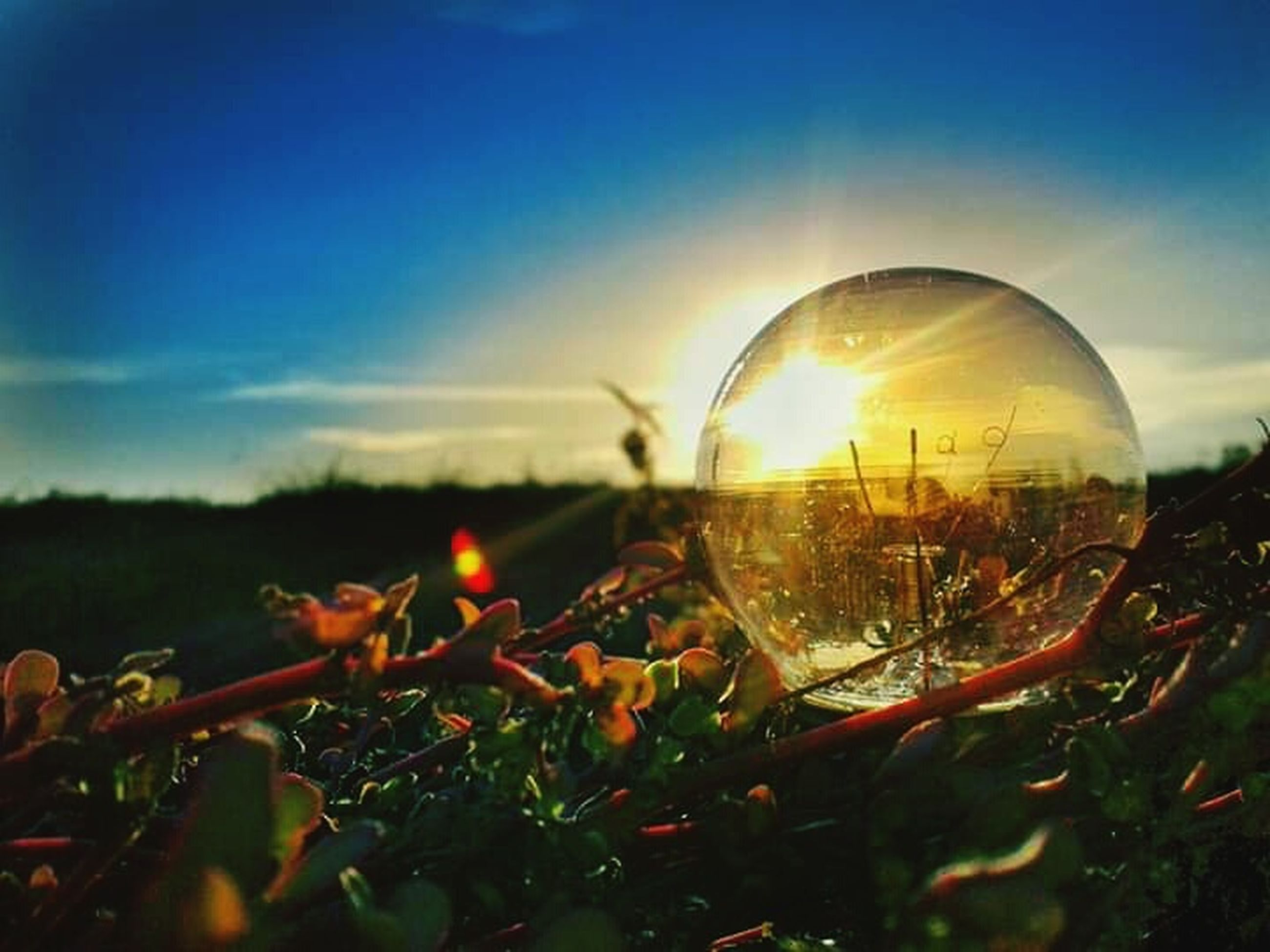 sky, nature, plant, transparent, field, glass - material, close-up, no people, cloud - sky, growth, selective focus, land, outdoors, reflection, sunset, beauty in nature, sunlight, landscape, day, flowering plant, lens flare, digital composite