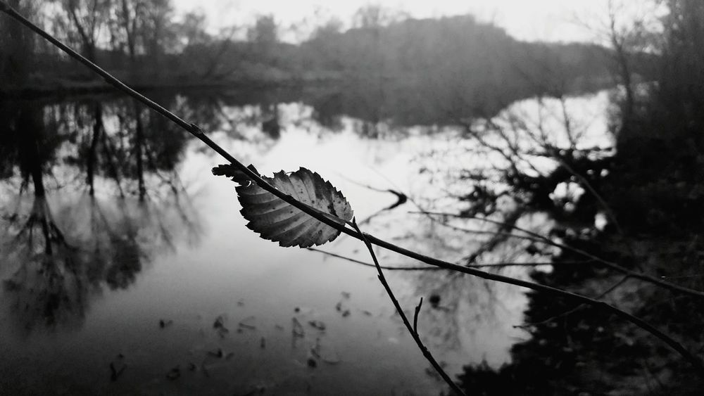The Last Leaf. Autumn First Eyeem Photo Greyscale Black & White Blackandwhite Black And White Black&white Blackandwhite Photography Blackandwhitephotography Black And White Photography Leaf Riverside River Riverbank River View Relaxing Relax Beautiful Beauty Details Beautyinnature  Beautyiseverywhere Beautyindecay Serene Taketime