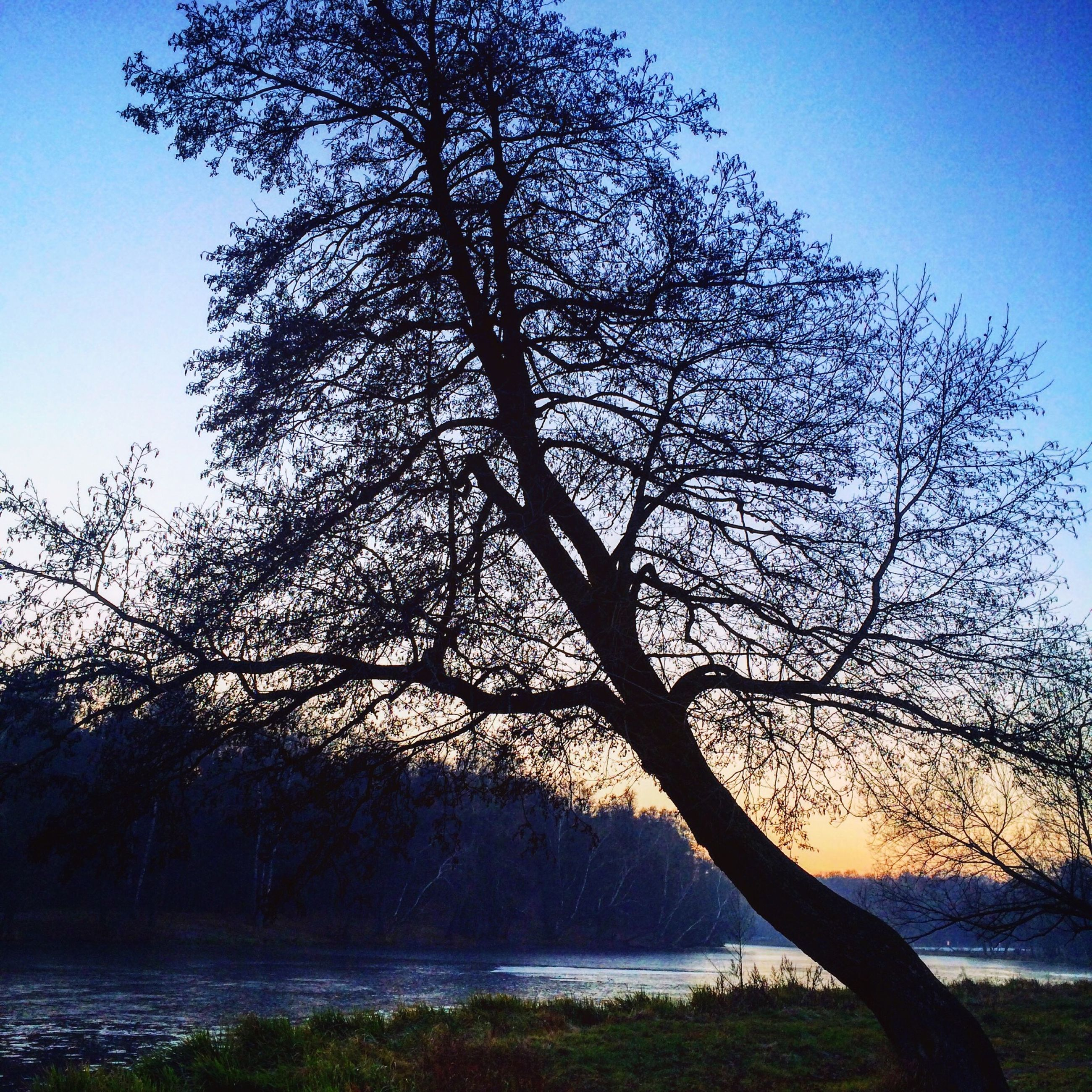 tree, water, tranquility, tranquil scene, scenics, branch, beauty in nature, bare tree, clear sky, nature, sky, silhouette, tree trunk, lake, idyllic, sea, sunlight, non-urban scene, growth, blue
