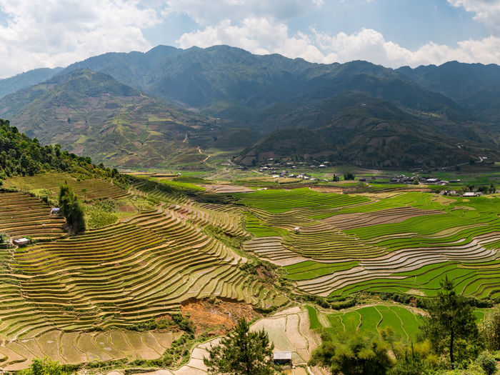 Scenic View Of Rice Paddy Against Mountains