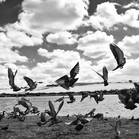 IPhoneography Blackandwhite Black And White ProCamera 8 Black & White Iphoneonly Birds
