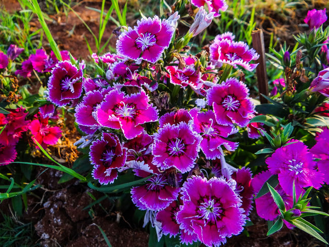 WOWWWW... FLOWERS... Flower Purple Nature Beauty In Nature Plant No People High Angle View Fragility Outdoors Day Freshness Close-up Flower Head