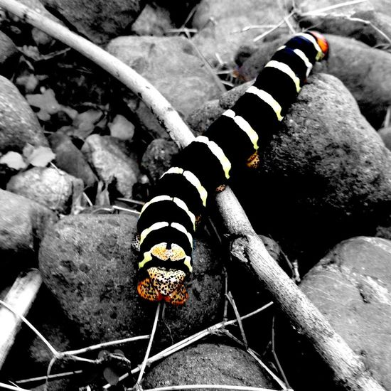 >>|- N Λ Τ U Γ Σ -|<< Caterpillar Colorsplash Colorful Climbing Darkness And Light Beautiful Nature Nature_collection