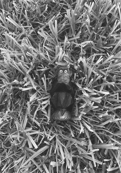 High angle view of insect on plant in field