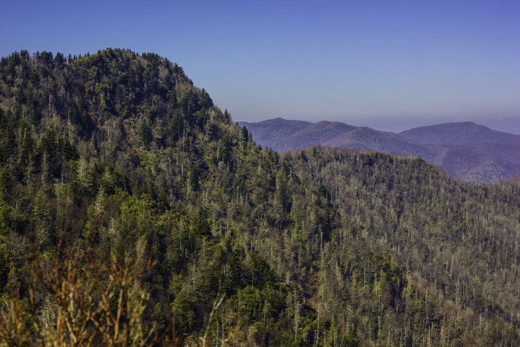 Mountain view. Beauty In Nature Big Rocks Blue Sky Day Far Far Away Growth Idyllic Landscape Mountain View Mountains Nature No People Non-urban Scene Outdoors Sky Smoky Mountains Tops Of Mountains Tranquility Traveling EyeEm Nature Lover Eyeem Photography