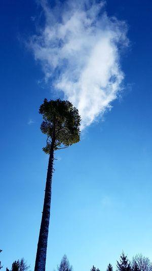 Beauty In Nature Blue Cloud - Sky Day Low Angle View Nature No People Outdoors Photo Art Sky Smoke Smoking Tree  Tree