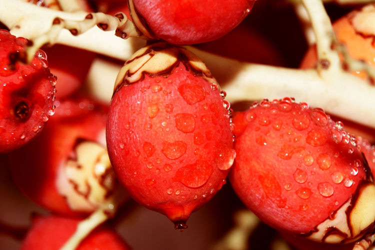 Close-up of wet red berries