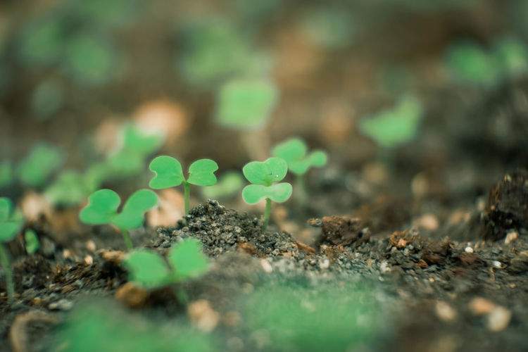 Green Color Plant Plant Part Beginnings Beauty In Nature Nature New Life Leaf Close-up Outdoors No People Surface Level Field Seedling Selective Focus Clover Growth Land Day Small Dirt EyeEm Best Shots EyeEmNewHere EyeEm Nature Lover