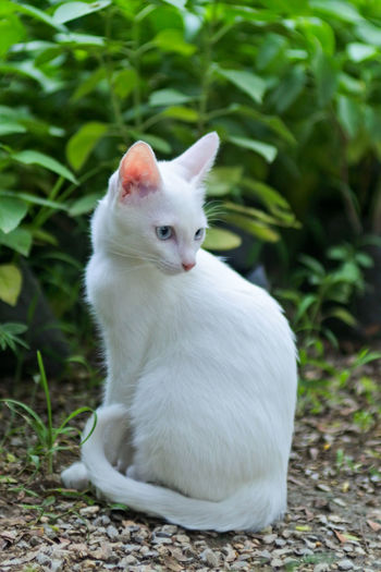 Close-up of white cat sitting on field