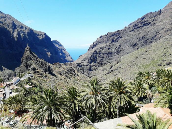 Masca, Tenerife Palm Tree Landscape Travel Destinations Beauty In Nature Mountain Tree