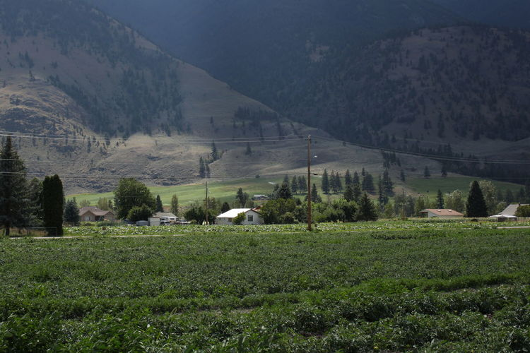 Farm Farm Life Growth British Columbia Farm Land Farming Field Green Color House Lone House Mountain Range Mountains No People Okanagan Outdoors Scenics Tranquil Scene Tranquility Valley