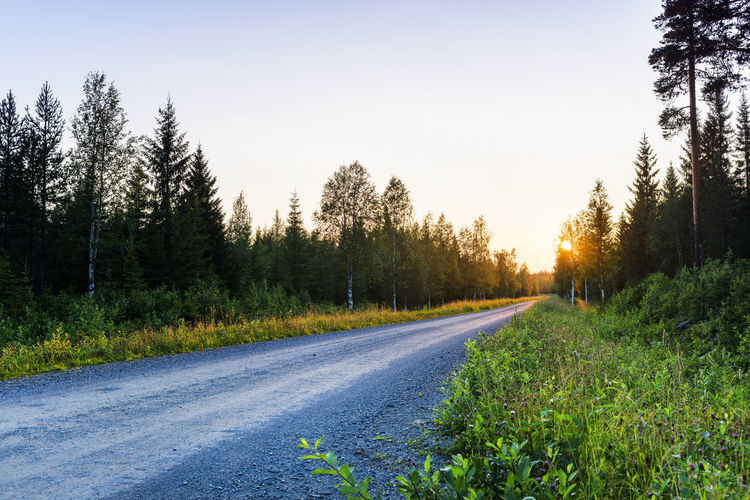 Tree Road Rural