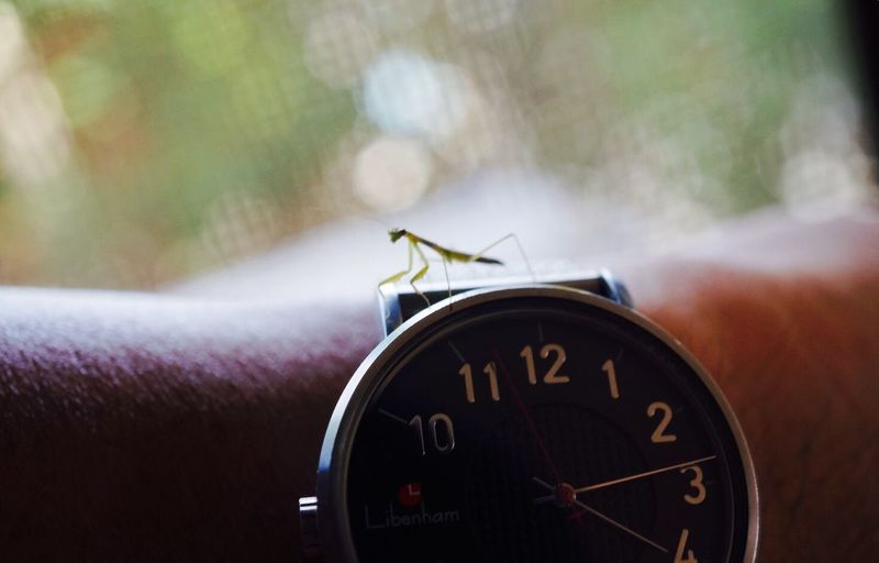 蟷 on my arm Eyeemoninstagram EyeEm Best Shots Fine Art Photography Everything In Its Place From My Point Of View EyeEmBestPics Eye4photography  EyeEm Gallery EyeEm Masterclass Showcase May Nature_collection Urban Spring Fever Mantis
