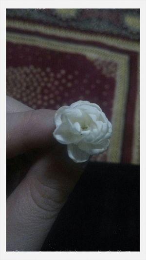 FlowerJAsmines