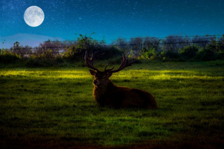 EyeEm Best Shots EyeEm Nature Lover EyeEmBestPics EyeEm Best Shots - Nature Beauty In Nature Edit Junkie Artistic Expression Space Astronomy Moon Antler Deer Sky Grass Moonlight Full Moon Stag