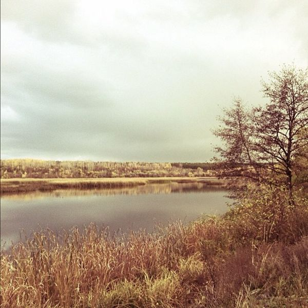 Природа река пейзаж Сызрань сердовина текучка сызранка scenery river bestoftheday iphoneography russia syzran