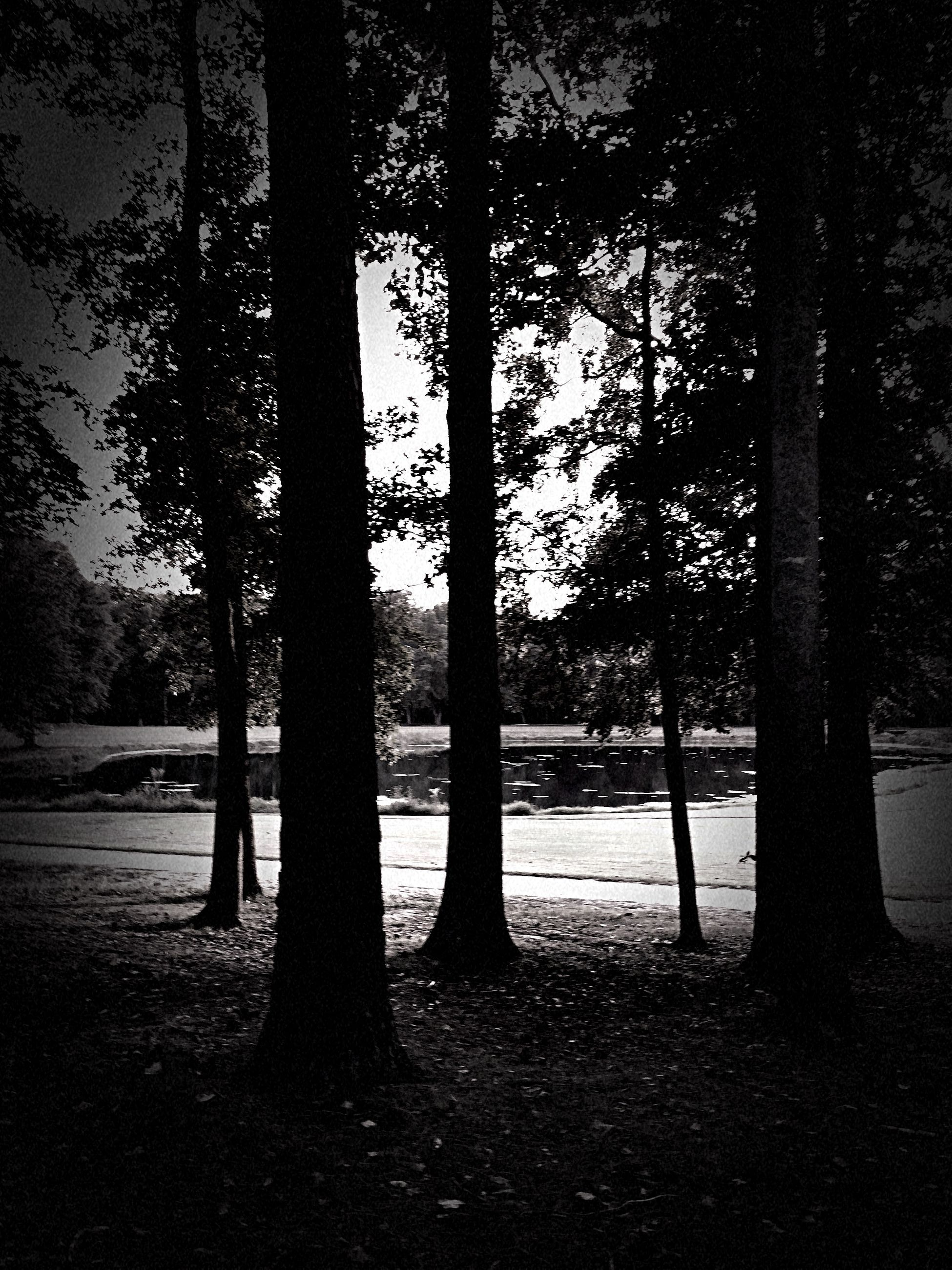 tree, tree trunk, tranquility, tranquil scene, nature, beauty in nature, silhouette, scenics, growth, landscape, sunlight, sunset, branch, field, idyllic, park - man made space, outdoors, non-urban scene, no people, shadow