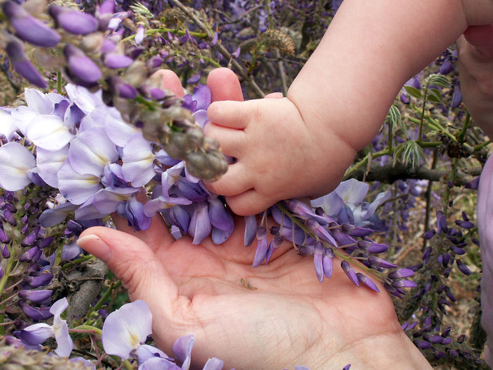 Motherly bond Baby Hands  Mother And Daughter Baby And Mom Beauty In Nature Childhood Close-up Day Florist Flower Flower Head Fragility Freshness Growth Holding Human Body Part Human Hand Nature Outdoors People Plant Purple Real People Togetherness Two People