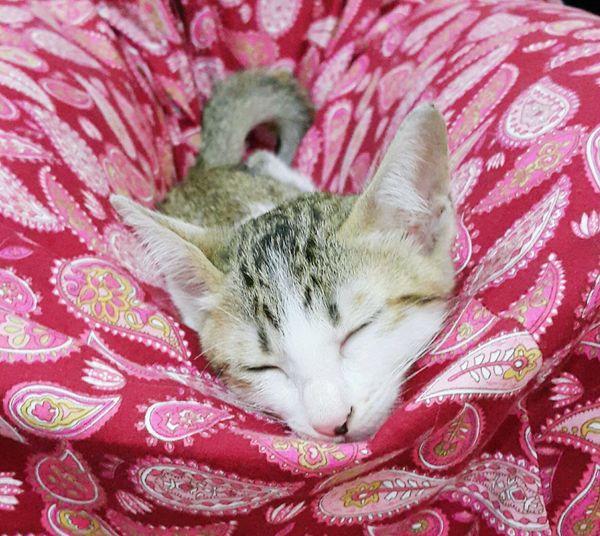 Like a cradle... Sleeping Cat Sleeping Cutie!  My Pet