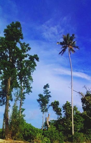 Fresh green and bright blue Sky, Natural Beauty Life Is A Beach