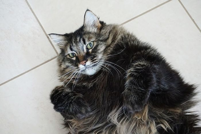 Hey  Höst What Are You Doing  I am just a Cat, an Animal Not a Model go FAR AWAY Amazing Lazy Cat Portrait Shades Of Winter