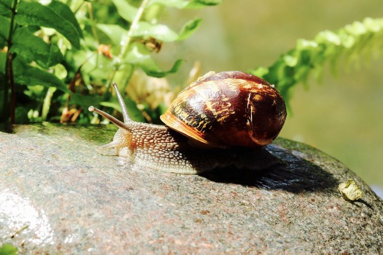 Close-up side view of a snail