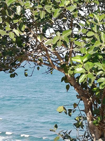 SEA AND TREE Sea Seaside Tree Water Branch Leaf Sky Calm Tranquil Scene Green Shore